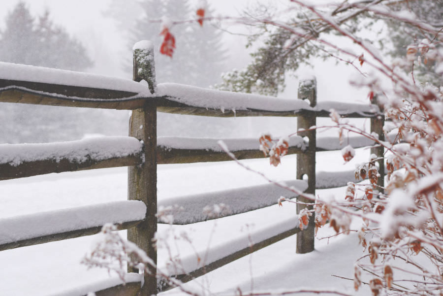 Picture of a snow covered fence in winter